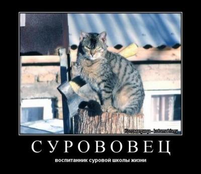Улыбнуло - proxy.imgsmail.ru.jpeg