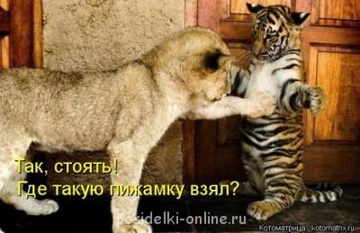 Позитивчик: : :  - getImageCAYP9QLJ.jpg