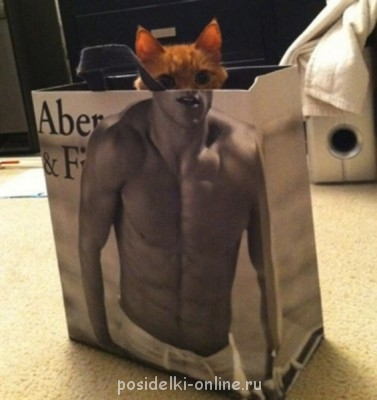 С днем рождения mama6h  - Perfectly-Timed-Animal-Photo-31-Cat-Bodybuilder.jpg