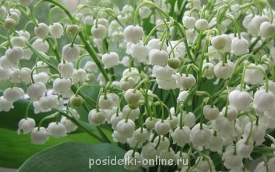 Дорогая Pani Julcia С Днём рождения  - 82299422_4347255_Mnogo_landishei.jpg